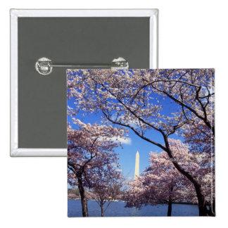Flores de cerezo en botón del pinback del Washingt