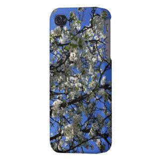 Flores de cerezo en caso del iPhone 4/4s de la pri iPhone 4 Fundas