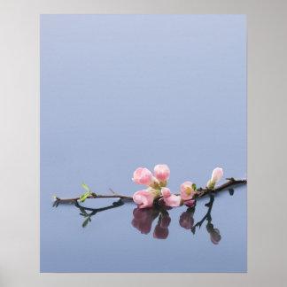 Flores de cerezo en el agua poster