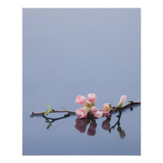 Flores de cerezo en el agua póster