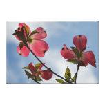 Flores de cerezo en el cielo lona estirada galerías