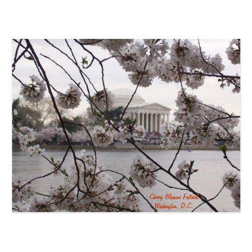 Flores de cerezo en el lavabo de marea tarjetas postales