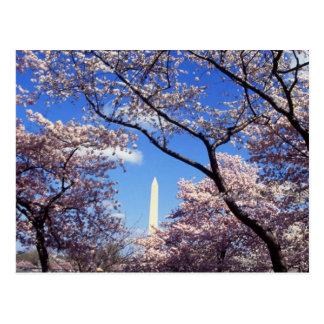 Flores de cerezo en la C.C. de Washington Postales
