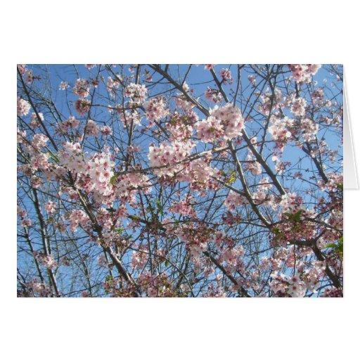 Flores de cerezo en la plena floración tarjeta de felicitación