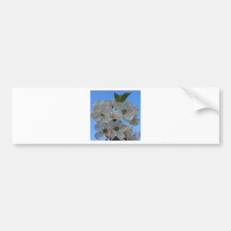 Flores de cerezo etiqueta de parachoque