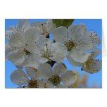 Flores de cerezo felicitaciones