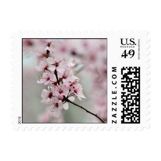 Flores de cerezo florecientes de la primavera sello