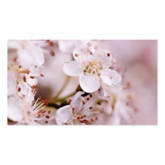Flores de cerezo florecientes plantilla de tarjeta de negocio