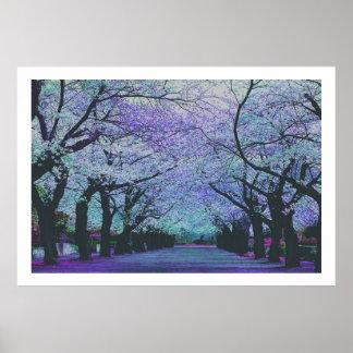 Flores de cerezo florecientes Tokio, Japón Poster