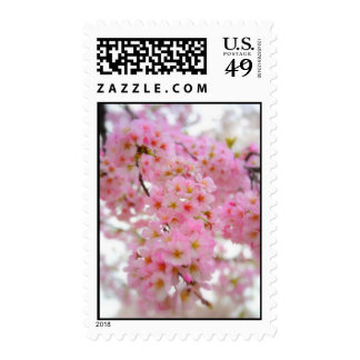 Flores de cerezo franqueo