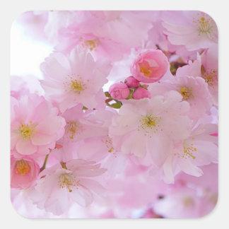 Flores de cerezo, japonesas pegatina cuadrada