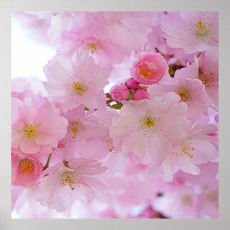 Flores de cerezo, japonesas póster