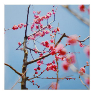 Flores de cerezo japonesas póster