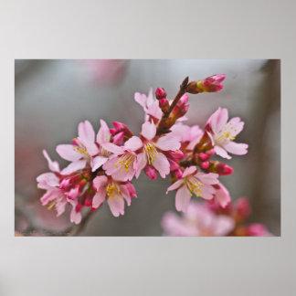 Flores de cerezo japonesas rosadas silenciadas póster