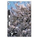 Flores de cerezo japonesas Sakura Pizarra Blanca