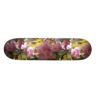 Flores de cerezo magníficas tablas de skate