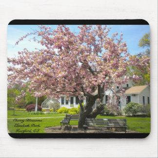 Flores de cerezo, parque de Elizabeth, Hartford CT Alfombrillas De Ratones