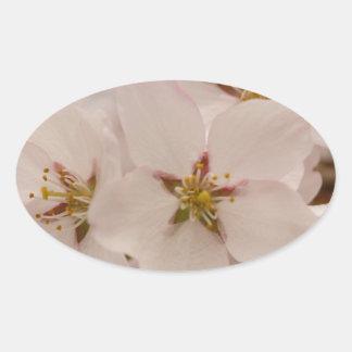 Flores de cerezo calcomanía de ovaladas