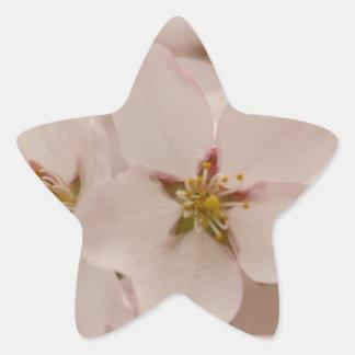 Flores de cerezo colcomanias forma de estrella