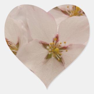 Flores de cerezo calcomania de corazon