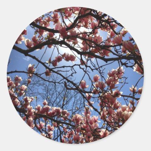 Flores de cerezo pegatina redonda