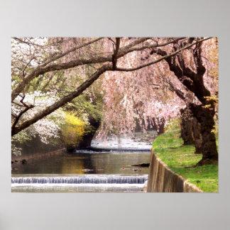 Flores de cerezo por la corriente del molino póster