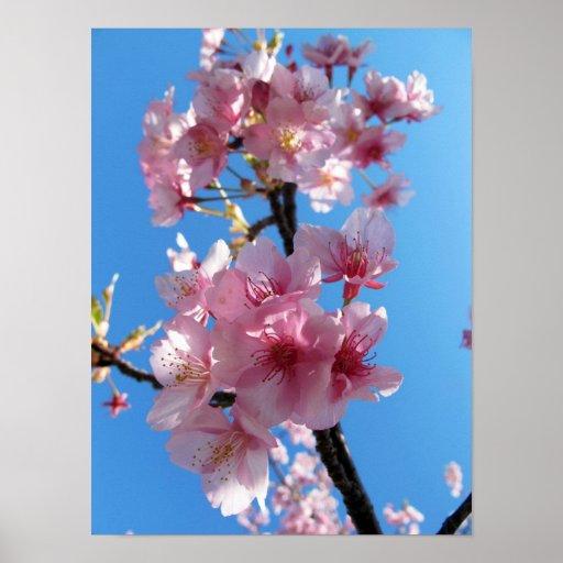 Flores de cerezo poster