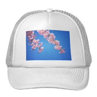 Flores de cerezo rosadas contra un cielo azul, NYC Gorra