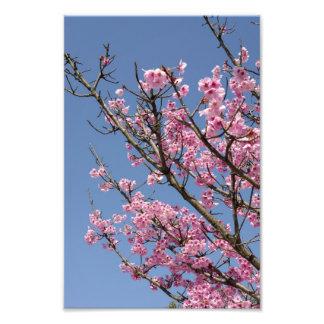 Flores de cerezo rosadas hermosas y cielo azul impresiones fotográficas