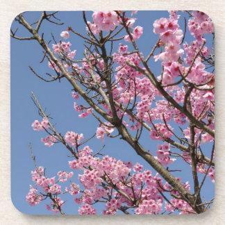 Flores de cerezo rosadas hermosas y cielo azul posavasos de bebidas