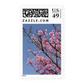 Flores de cerezo rosadas hermosas y cielo azul sello