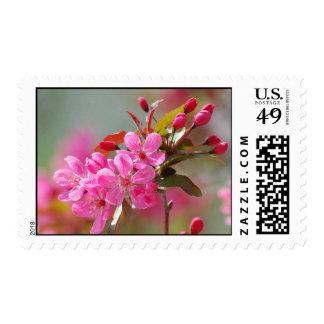 Flores de cerezo rosadas oscuras estampilla