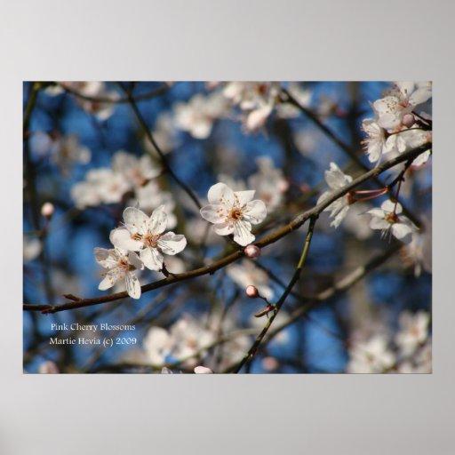 Flores de cerezo rosadas póster