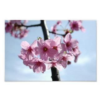 Flores de cerezo rosadas y cielo azul claro impresion fotografica
