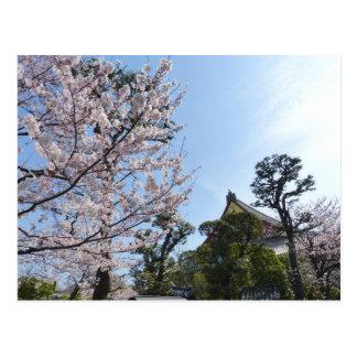 Flores de cerezo Sakura de Tokio Postales