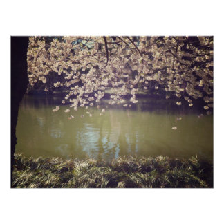 Flores de cerezo sobre una charca del jardín, todo póster