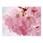 Flores de cerezo suaves del rosa del vintage tarjetas postales