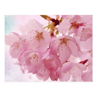 Flores de cerezo suaves del rosa del vintage postal