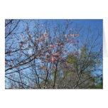 Flores de cerezo tarjeta de felicitación