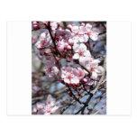 flores de cerezo tarjeta postal