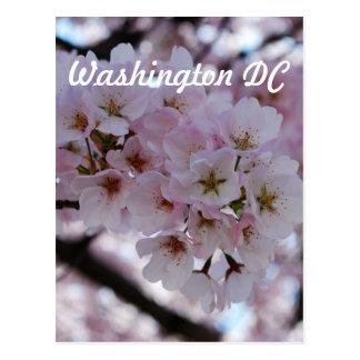 Flores de cerezo tarjetas postales