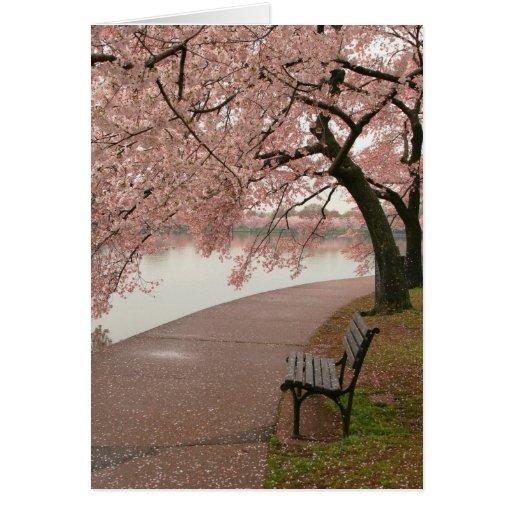 Flores de cerezo y banco tarjeta de felicitación
