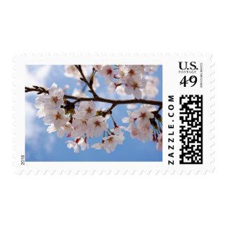 Flores de cerezo y cielo azul claro sello