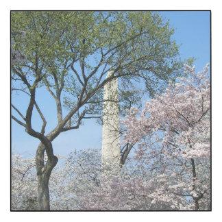 Flores de cerezo y el monumento de Washington en Impresión En Madera