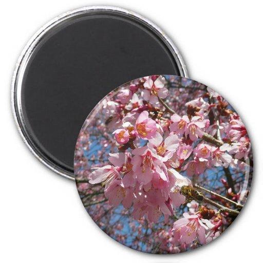 Flores de cerezo y primavera rosada de la abeja imán redondo 5 cm
