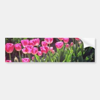 Flores de color rosa oscuro de los tulipanes etiqueta de parachoque