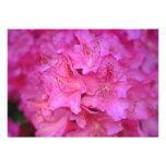 Flores de color rosa oscuro del racimo de la azale anuncio personalizado
