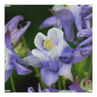 Flores de Columbine Anuncio