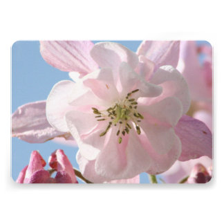 Flores de Columbine Comunicados
