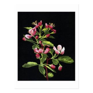 Flores de Crabapple de la pradera Tarjeta Postal